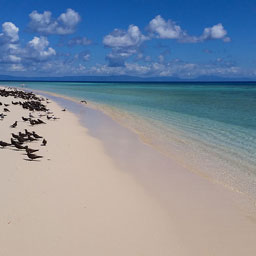 Michaelmas Cay, Great Barrier Reef Tour