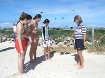 Michaelmas Cay Bird Sanctuary