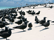 Great Barrier Reef Bird Sanctuary